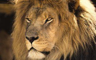 King III, king 3